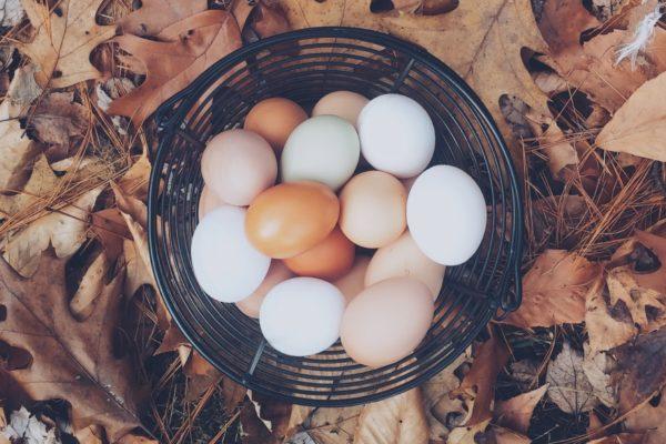 コレステロール ダイエット 卵